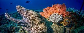 Famous Manta Reef Mozambique