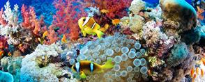 For Divers Red Sea